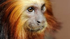 planete-singes